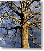 White Oak And Storm Clouds Metal Print by Thomas R Fletcher