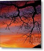 White Oak Sunrise Metal Print
