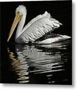 White Pelican De Metal Print
