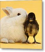 White Rabbit And Bantam Chick On Yellow Metal Print