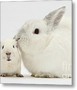 White Rabbit And White Guinea Pig Metal Print