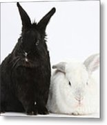 White Rabbit With Black Rabbit Metal Print