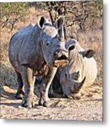 White Rhinoceros Metal Print