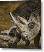 White Rhinos Metal Print