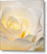 White Rose Blooming Metal Print