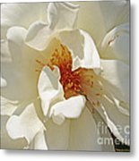 White Rose Stemens Metal Print