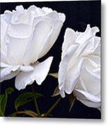 White Rose Twins. Metal Print