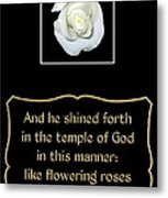 White Rose With Bible Verse From Sirach Metal Print