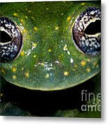 White Spotted Glass Frog Metal Print