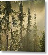 White Spruce In Mist At Sunrise Metal Print