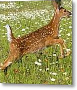 White Tailed Deer Fawn In Field Of Metal Print
