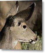 White Tailed Deer Metal Print