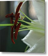White Tiger Lily II Metal Print