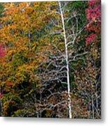 White Tree Fall Colors  Metal Print