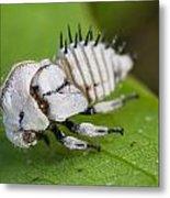 White Treehopper Nymph Metal Print