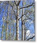 White Trees Against A Blue Sky Metal Print