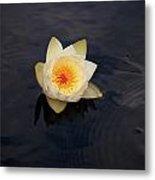 White Water-lily 2 Metal Print