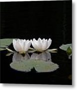White Water-lily 6 Metal Print