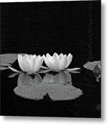 White Water-lily 7 Metal Print