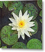 White Water Lily Metal Print by Andee Design