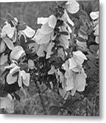 White Wild Flowers B W Metal Print