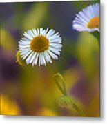 White Wildflower On Pastels Metal Print by Bill Tiepelman