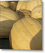 White Yellow Pumpkins Metal Print