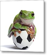 Whites Tree Frog On Small Football Metal Print