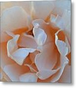 Whitest Rose Metal Print by Naomi Berhane