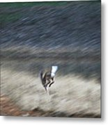 Whitetail Abstract Metal Print