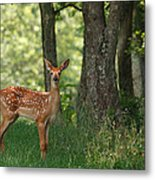 Whitetail Deer Fawn Metal Print