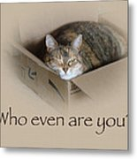 Who Even Are You - Lily The Cat Metal Print