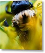 Who Knew Bees Have Mustaches Metal Print by Beth Akerman