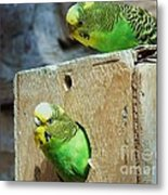 Who's There? Metal Print by Donna Parlow