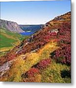 Wicklow Way, Co Wicklow, Ireland Long Metal Print