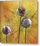 Wild Allium Ala Grunge Metal Print