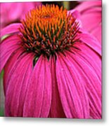 Wild Berry Purple Cone Flower Metal Print