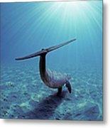 Wild Bottlenose Dolphin Metal Print