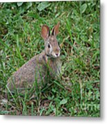 Wild Bunny Metal Print