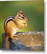 Wild Chipmunk  Metal Print