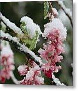 Wild Currant Blossoms Ribes Sanguineum Metal Print