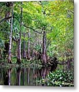 Wild Florida - Hillsborough River Metal Print