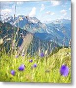 Wild Flower And Grass Metal Print