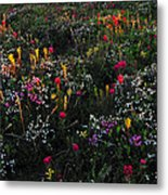 Wild Flower Field In Early Summer Metal Print