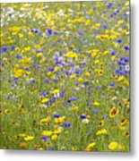 Wild Flowers In A Field Metal Print