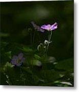 Wild Geranium In Woodland Light Metal Print