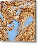 Wild Grasses Against A Blue Sky Metal Print