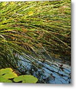 Wild Green Grass And A Blue Pond Metal Print