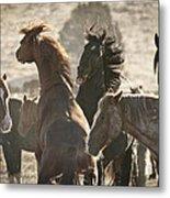 Wild Horse Battle Metal Print