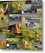 Wild Horse Collage  Metal Print